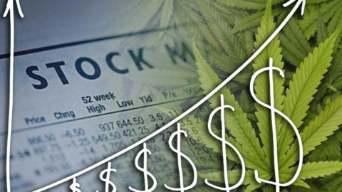 There are Still Unknown Pot Stocks!